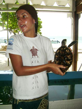Los Roques Scientific Foundation protecting sea turtles